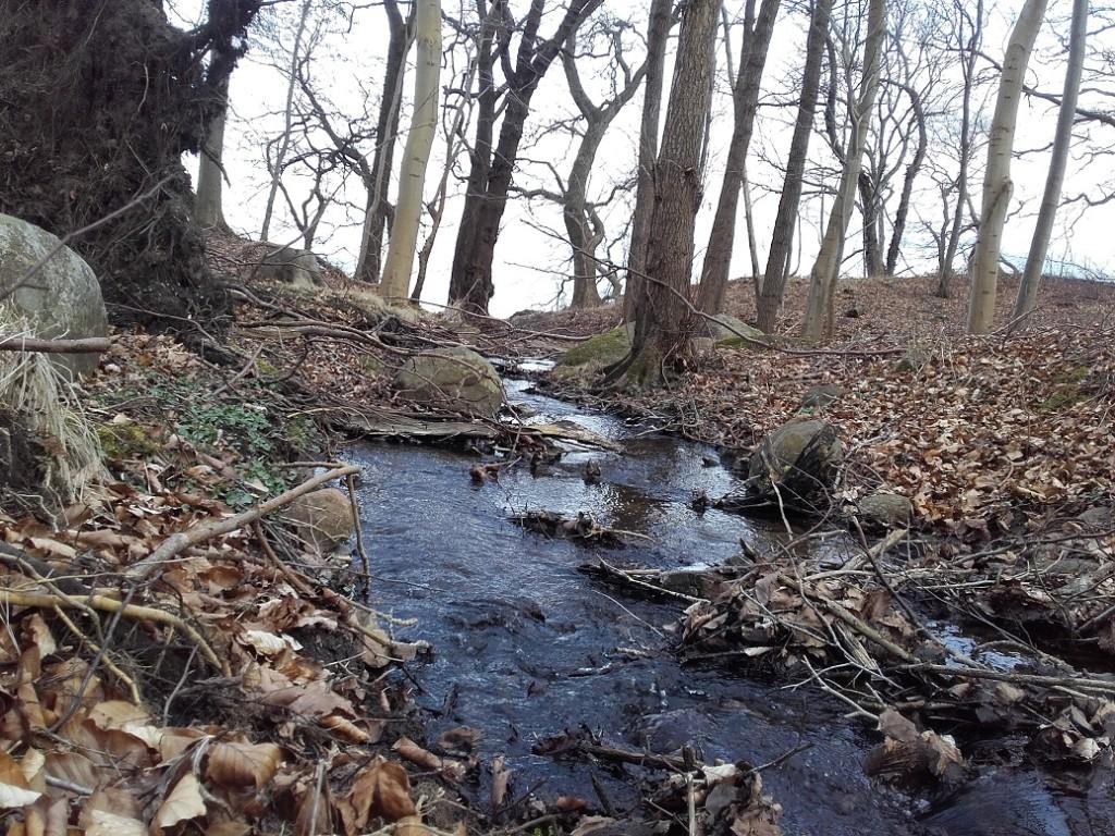Vandløbet i Stokkebjerg skov igen