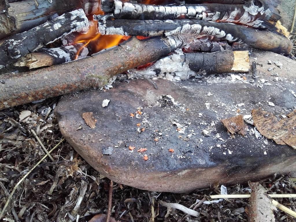 Tanglopper ristet på sten